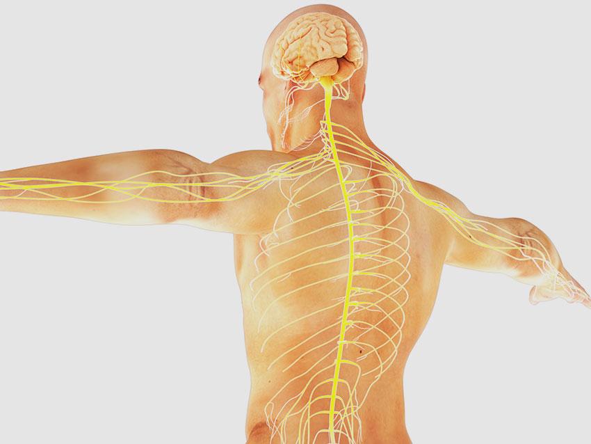 Beyin ve Omurilik Tümörleri