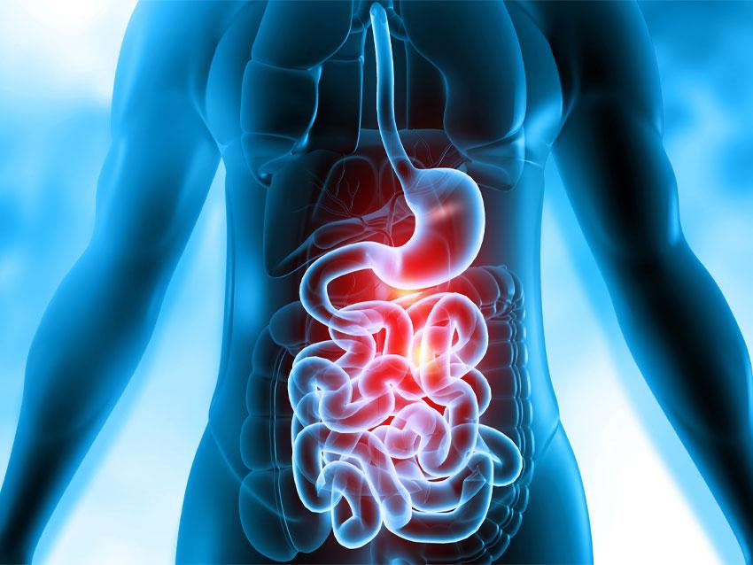 Gastroenteroloji