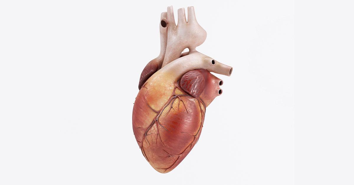 Kalp Kapakçığı Ameliyatları